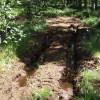 В Жуковском начали сажать деревья вместо срубленных в Цаговском лесу
