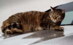 Mercedes-Benz нанял кошек для демонстрации аэродинамических свойств CLA