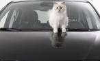 Карл Лагерфельд выбрал в качестве модели Opel Corsa и кошку Шупетт