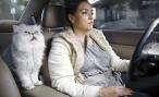 Котики «рулят»! Совет как поднять продажную цену старого авто в 40 раз