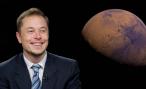 Tesla может создать в России собственное производство — Маск сказал