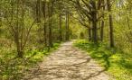 «Гаишникам» запретят прятаться в кустах
