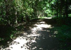 Лес, парк