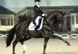 Деймон Хилл, лошадь