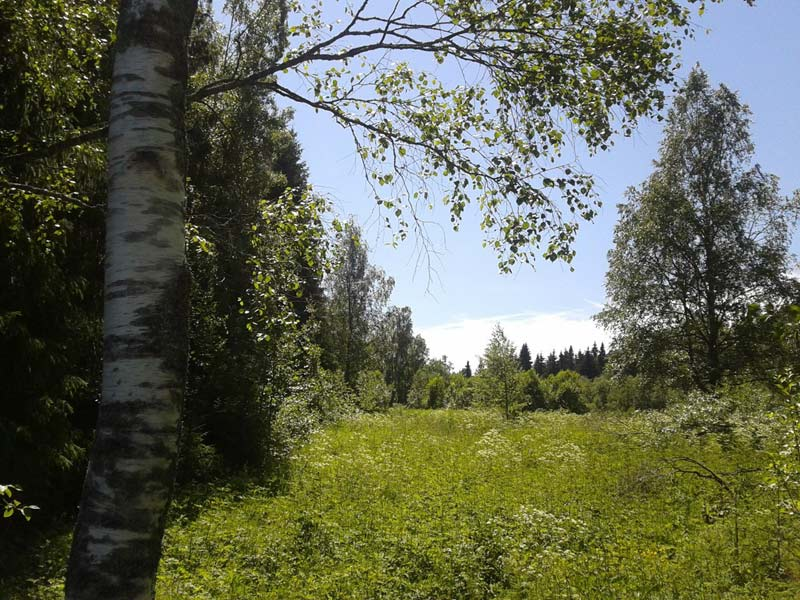 Лес, поляна, Россия