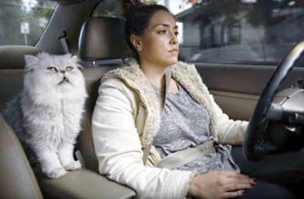 Кот в автомобиле